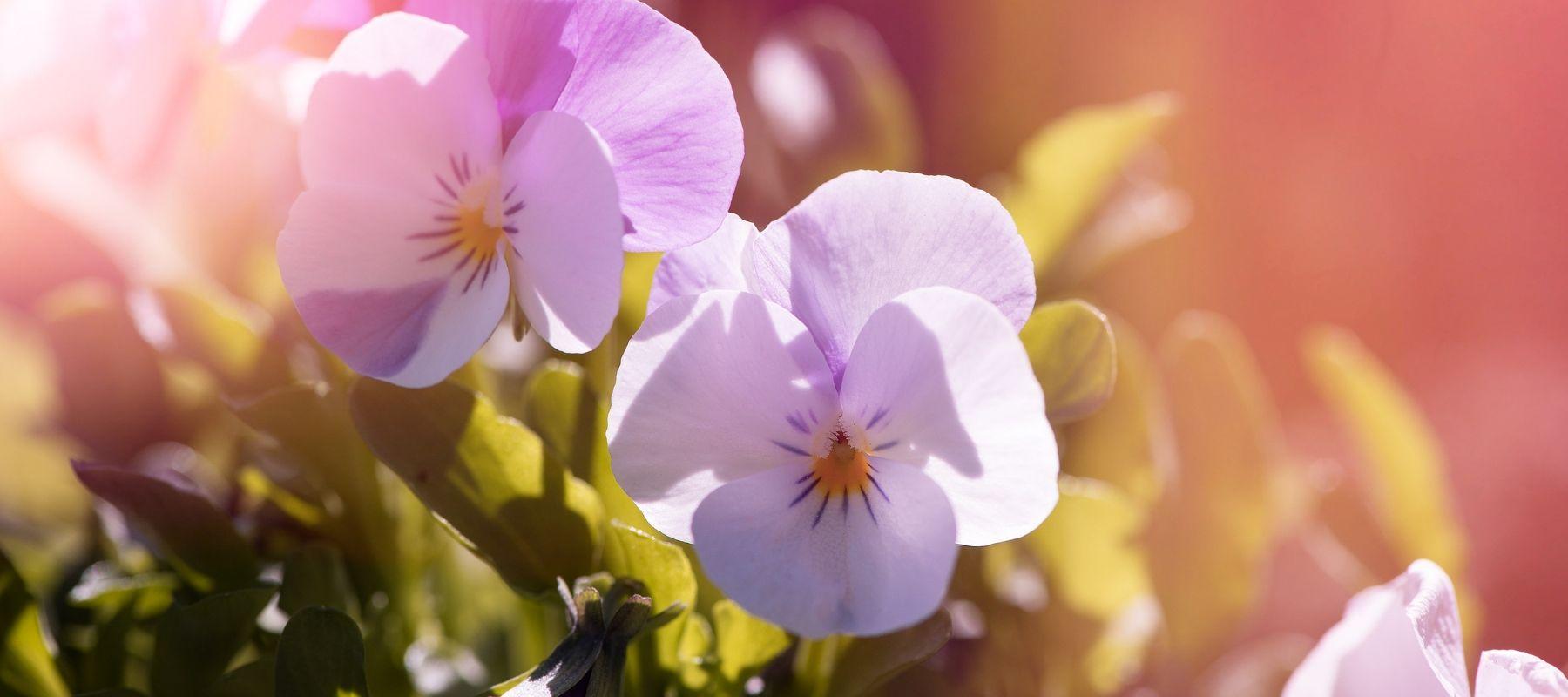 Abundance Garden Centre Spring Guide