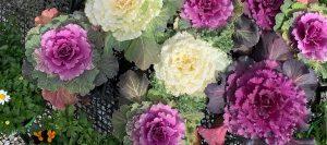 Spring-GardenCentre